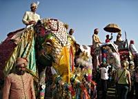 Elephant Festival Tour