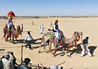 Jaisalmer Desert Festival, Camel Show
