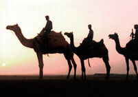 Sam Dunes, Camels at Sunset