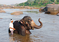 Tungabhadra River, Temple Elephant